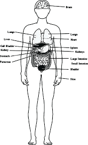 Human Coloring Pages Human Body Outline With Organs Coloring Pages