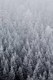 winter trees wallpaper hd. Beautiful Wallpaper Winter Pine Trees IPhone Wallpaper HD 640x960 With Hd N