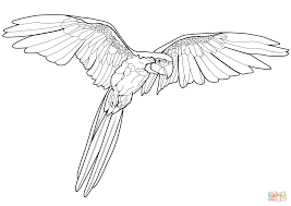 Macaw Coloring Page Flying Macaw Coloring Page Free Printable ...