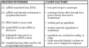 teaching process analysis essay sample process analysis essay tailored essays