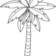 Small Picture Coloring Page Banana Tree 13213 Coloring Page Banana Tree In