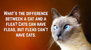 Funny Cat Quotes Text Image Quotes Quotereel