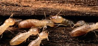 Image result for Termite Control assistance