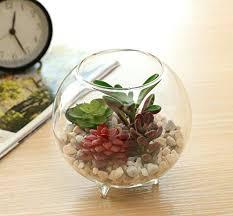 glass plant terrariums prime glass plant terrarium south africa
