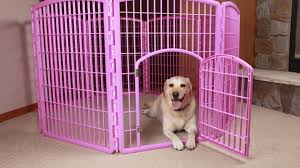 the best exercise pens or playpens for every kind of dog the dog people by rover com