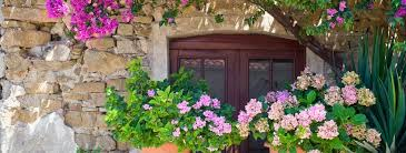 a guide to mediterranean garden plants