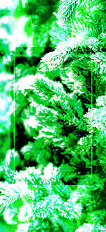 Light Tree Ppt Download Free Picture Christmas Tree Green Light Background