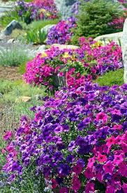 purple flowers garden