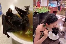 Image result for Eat bats?