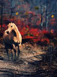 Running Horse Wallpaper ...