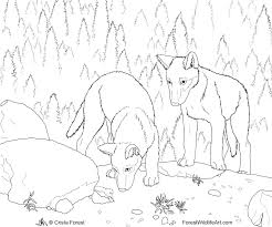 Wild Wolf Coloring Pages Forest Wildlife