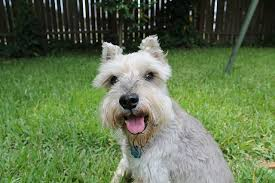 bye bye rats the 7 best homestead dogs for vermin control