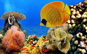 tropical aquarium wallpaper. Contemporary Aquarium Tropical Fish And Aquarium Wallpaper A
