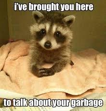 Trash Panda, September 15th:... - Run Raccoon Mountain | Facebook