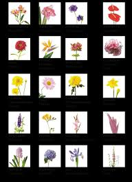 types of flowers age of flower diffe types of flowers
