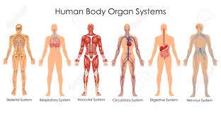 Whole Body Chart Medical Chart Female Body Bedowntowndaytona Com