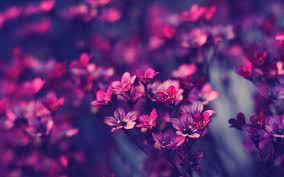 Purple Flower Desktop Wallpapers - Top ...