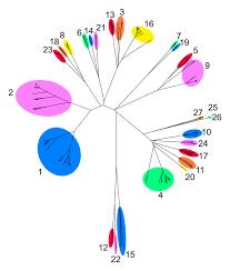 Bluetounge Virus Molecular Biology Of Bluetongue Virus Bluetongue European Union