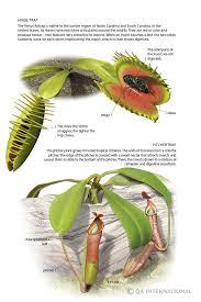 Heterotrophic Plants Visual Dictionary