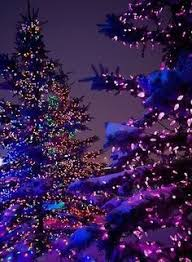 How to Wrap a Tree with Lights | Small trees, Christmas lights and ...