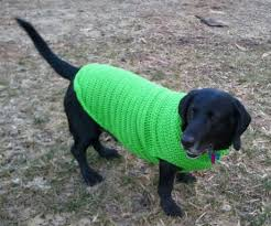 Free Crochet Dog Sweater Patterns Gorgeous Crocheted Dog Sweater Pattern A Place For Learning