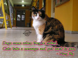 Funny Cat Quotes Inspirational Quotesgram Funny Cat Pictures With