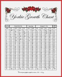 Morkie Puppy Weight Chart 75 Most Popular Morkie Weight Chart