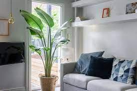 Una grande pianta da interni impreziosisce i tuoi interni. Piante Da Interno Alte Le Piu Maestose Per Arredare La Tua Casa