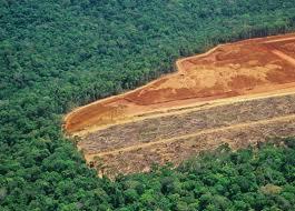 amazon rainforest deforestation. Simple Rainforest Deforestation In The Amazon Rainforest Northern Brazil In Rainforest Deforestation M