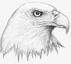 Pencil Drawing Images Animals At Paintingvalley Com