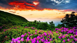 summer outdoors wallpaper. Mountain Flowers Morning Fields Photography Sun Flower Landscape Violet Wild Sunrise Sunshine Splendor Sky Mountains Sunrays Summer Outdoors Wallpaper U