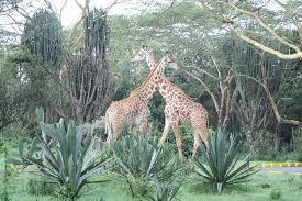 Image result for lake naivasha park
