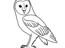 Cute Baby Animal Coloring Pages Owls Coloring Pages Baby Owl