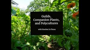 Paradise Gardening And The Permaculture Food Forest