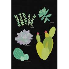 Succulent Plant Chart Iii Painting Print On Wrapped Canvas