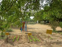 Kitchen Garden India India Kitchen Gardens And Fruit Tree Afforestation To Combat