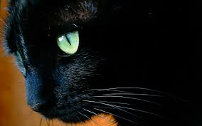 black cats with green eyes wallpaper.  Eyes Black Cat With Green Eyes Close Up Wallpapers And Images  Wallpapers  Pictures Photos And Cats With Green Eyes Wallpaper C