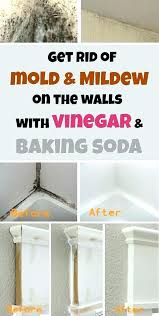 remove mold from bathroom ceiling. How To Remove Mold From Bathroom Ceiling With Vinegar On In