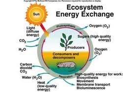 Ess Topic 2 3 Flows Of Energy And Matter Amazing World Of