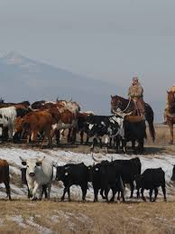 Book details Southern Oregon ranchers and ranching | Mail Tribune