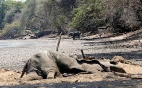 Wildlife Movement Chart Drought Hit Zimbabwe Plans Mass Elephant Rescue To Save