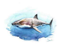 great white shark painting. Fine Great Image 0 Intended Great White Shark Painting
