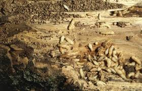 Image result for get rid of termites in the safest way