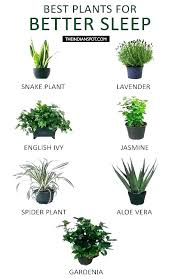 small office plant. Good Office Plants Indoor Plant Great Best For . Small