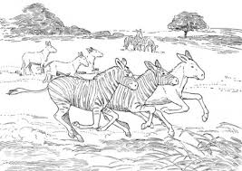 Small Picture African Animal Coloring Pages Animal Coloring pages of