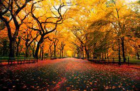 Late Autumn Desktop Themes Hd ...