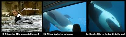 tilikum attack footage dawn. Perfect Footage Tilikum And Dawn Brancheau Are Depicicted In The Final Moments To Attack Footage