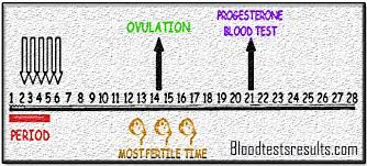 Normal Progesterone Levels After Ovulation Day 21