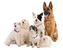 lots of dogs together. Interesting Lots Lotsofdogs With Lots Of Dogs Together 0