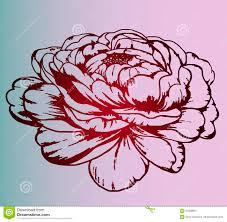 цветок пиона штемпель цвета татуировка иллюстрация штока